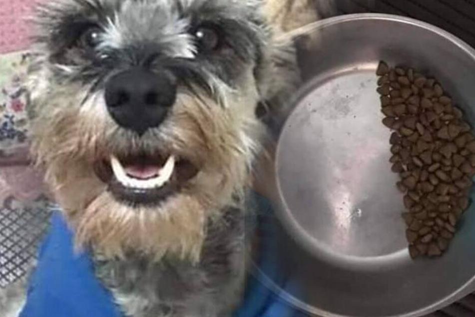 Hund frisst immer nur die Hälfte aus seinem Napf: Das ist der traurige Grund