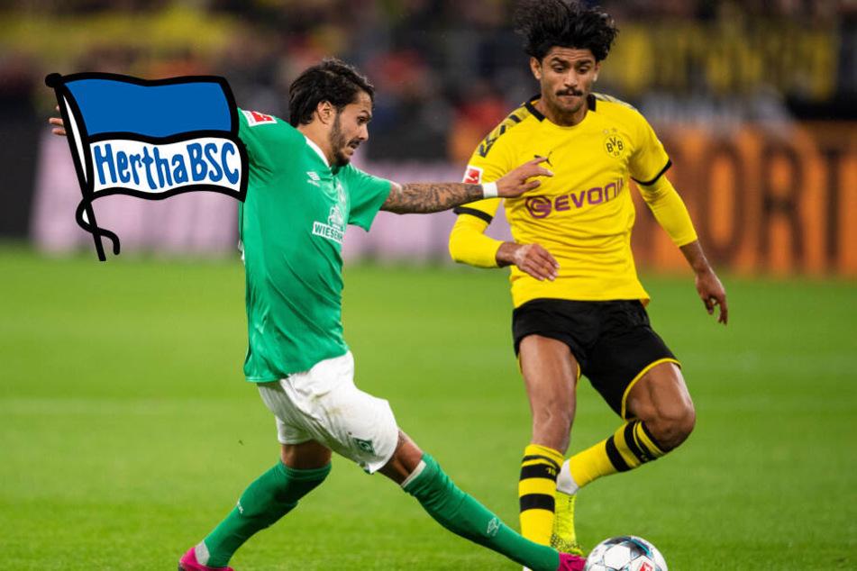 Arteta rechnet nicht mit Xhaka-Wechsel: Holt Hertha Dortmunds Dahoud?