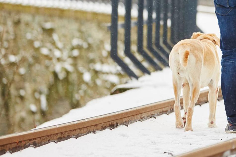 Tragisch! Mann will Hund retten und wird von Zug überrollt