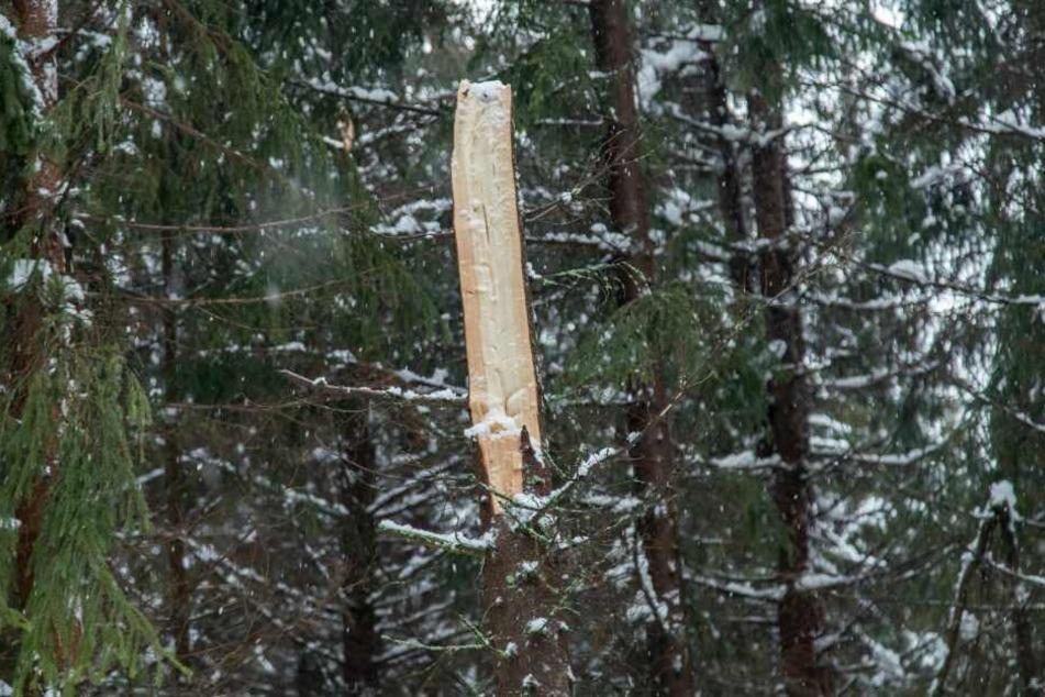 Zahlreiche Bäume sind unter der Schneelast der vergangenen Tage zusammengebrochen, der aktuelle Sturm verschärft die Lage.