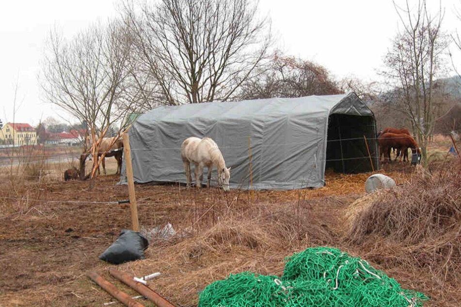 Die Pferde sollen in Hosterwitz von den Weiden verschwinden.