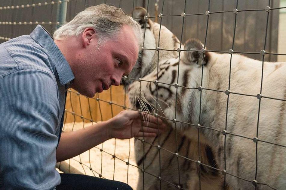 André Sarrasni (45) krault seine Tiger-Lady Kijana (3) durch das Gitter.