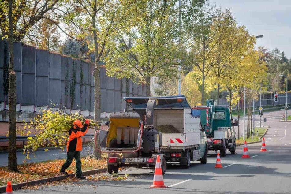 Wenn Mitarbeiter des Grünflächenamtes Bäume verschneiden, wie hier am Südring, kommt eine Menge Astwerk zusammen.