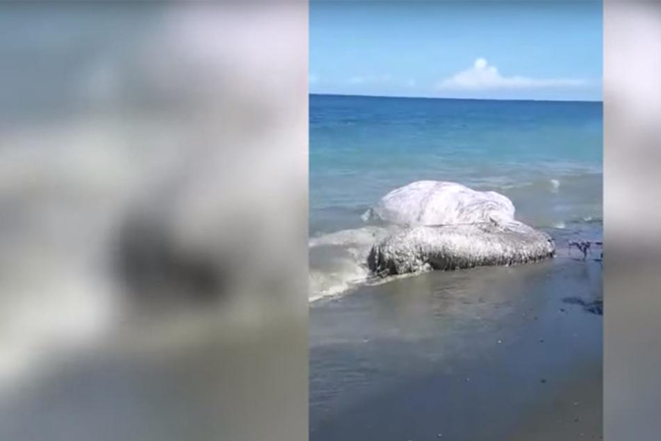 Ist es ein Monster? Was wurde hier denn an den Strand gespült?