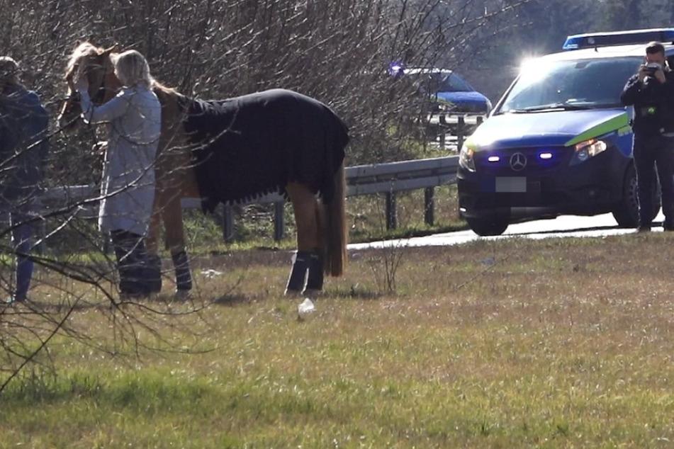 Nanu! Was sucht dieses Pferd denn auf der Autobahn?