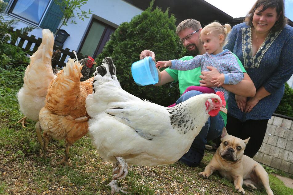 Simone und Stefan Wagner füttern mit ihrer Tochter Veronika die Hühner in ihrem Garten.