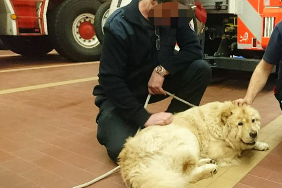 Die Herzen der Feuerwehrmänner eroberte die Hündin in kürzester Zeit.