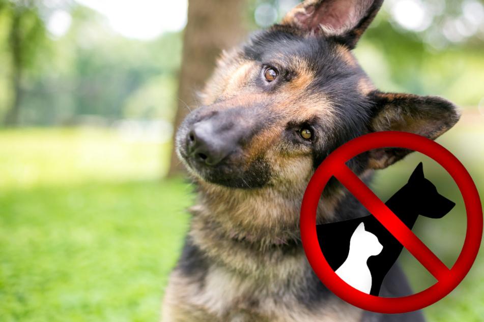 Experten warnen: Deshalb solltest Du Dir jetzt kein Haustier kaufen