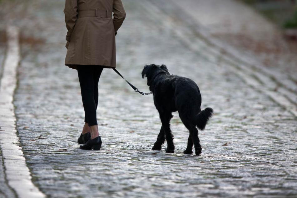 Der Hund machte durch sein bellen so sehr auf die Täter aufmerksam, dass diese die Flucht ergriffen. (Symbolbild)