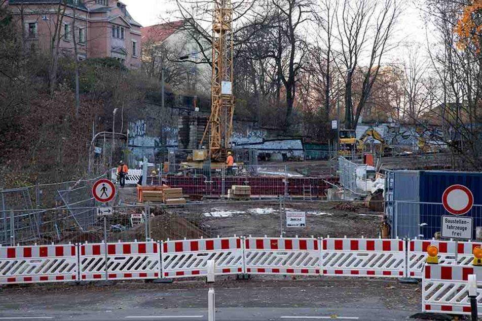 Nach Rodung am Kaßberg: Stadt ersetzt gefällte Bäume!