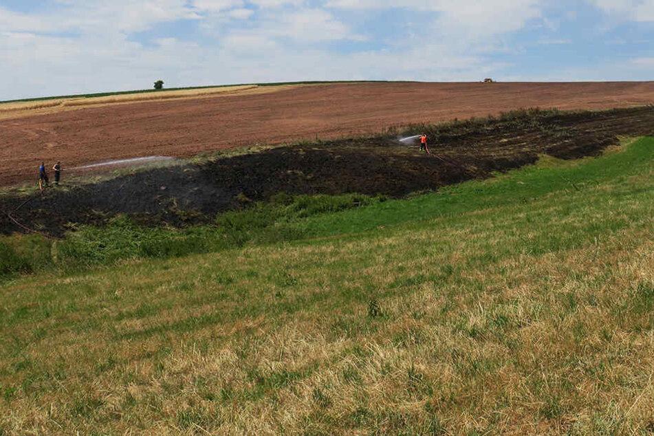 Schon wieder ein Feldbrand: Tausende Quadratmeter in Flammen