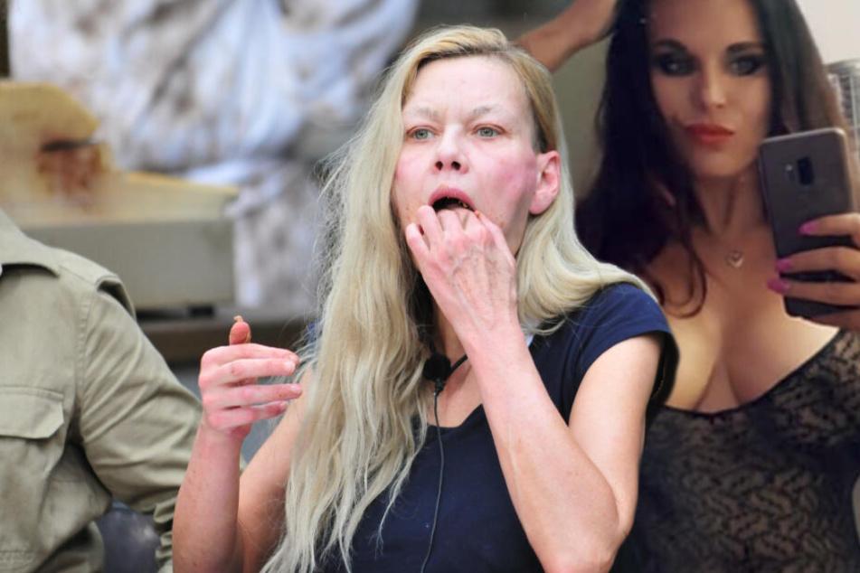 Dschungelcamp: Sie kehrt den Dschungel aus: Erotik-Queen macht Ex-Porno-Star Sibylle Rauch deftige Ansage