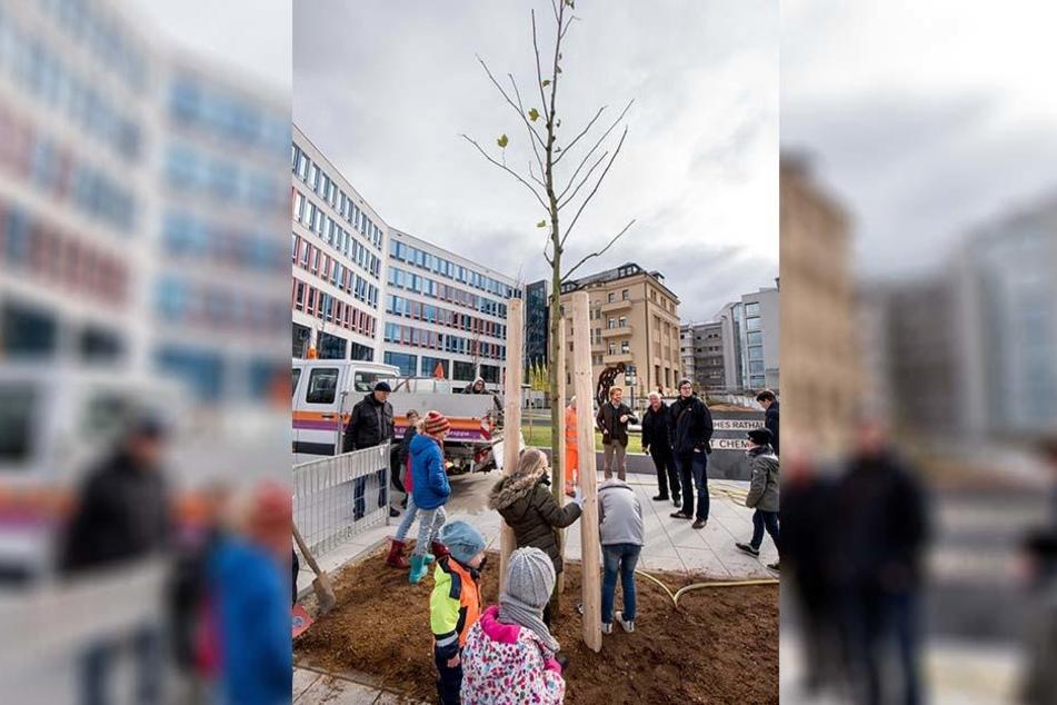 19 Platanen sollen vorm Neuen Technischen Rathaus eine Allee entlang der Bahnhofstraße bilden.