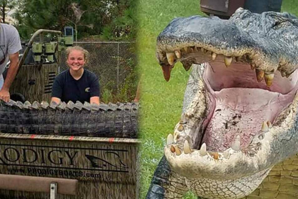 Trophäen-Jagd: Vier Meter langer Alligator erlegt!