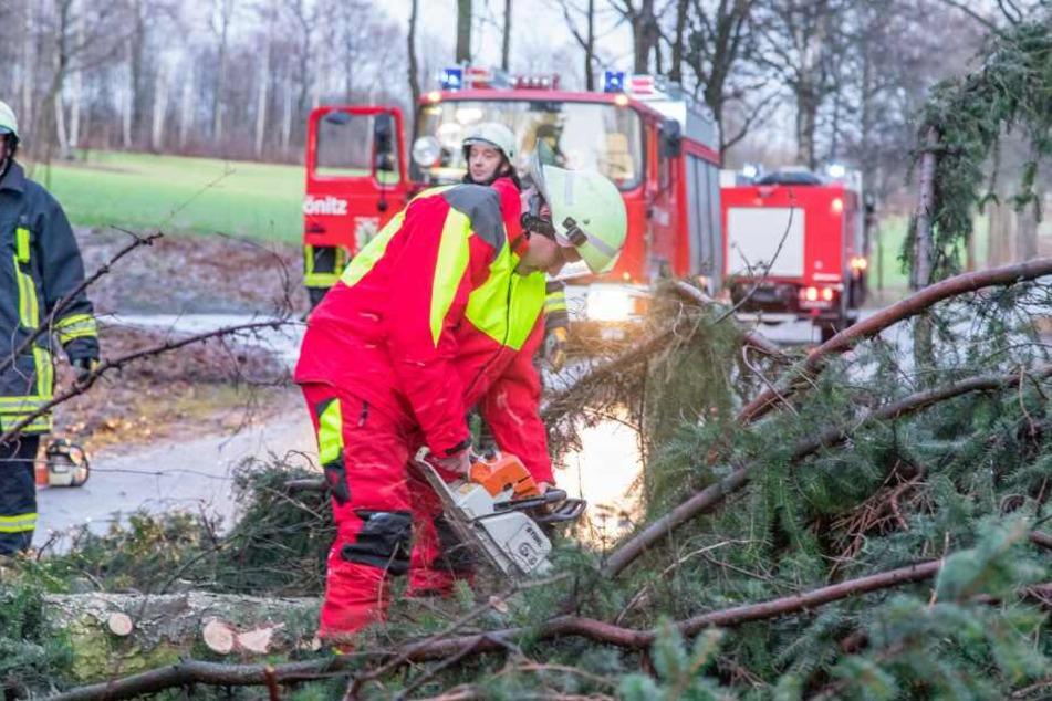 Die Feuerwehr musste die Straßen von zahlreichen umgestürzten Bäumen befreien. (Symbolbild)