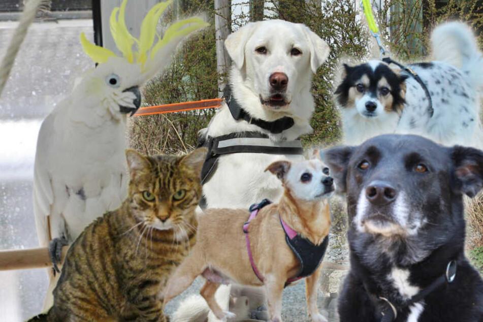 8 besondere Tierheim-Tiere: Wer hat ein Herz für diese Omas und Opas?