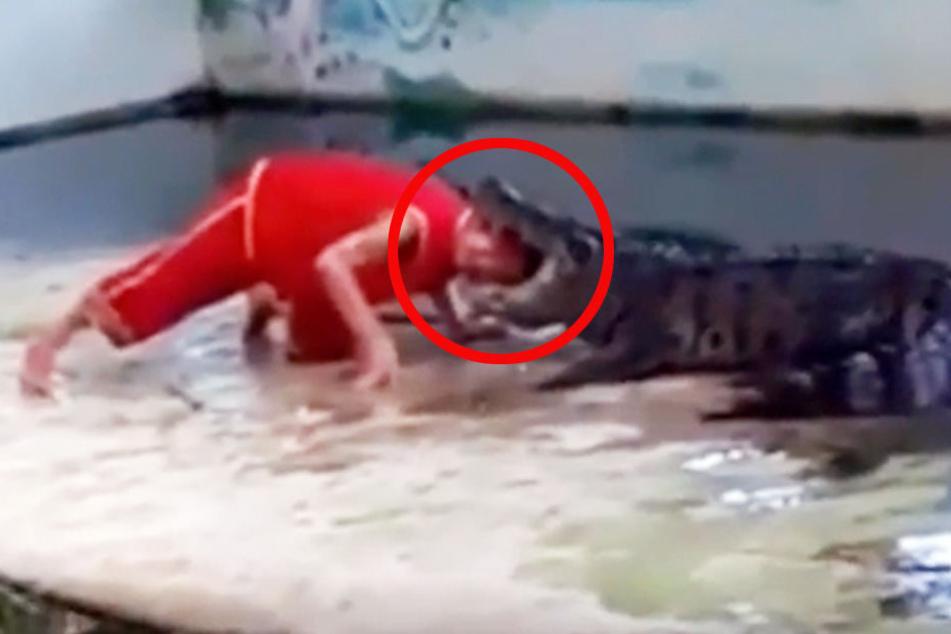 Lebensmüde! Hier steckt ein Mann seinen Kopf in ein Krokodilmaul