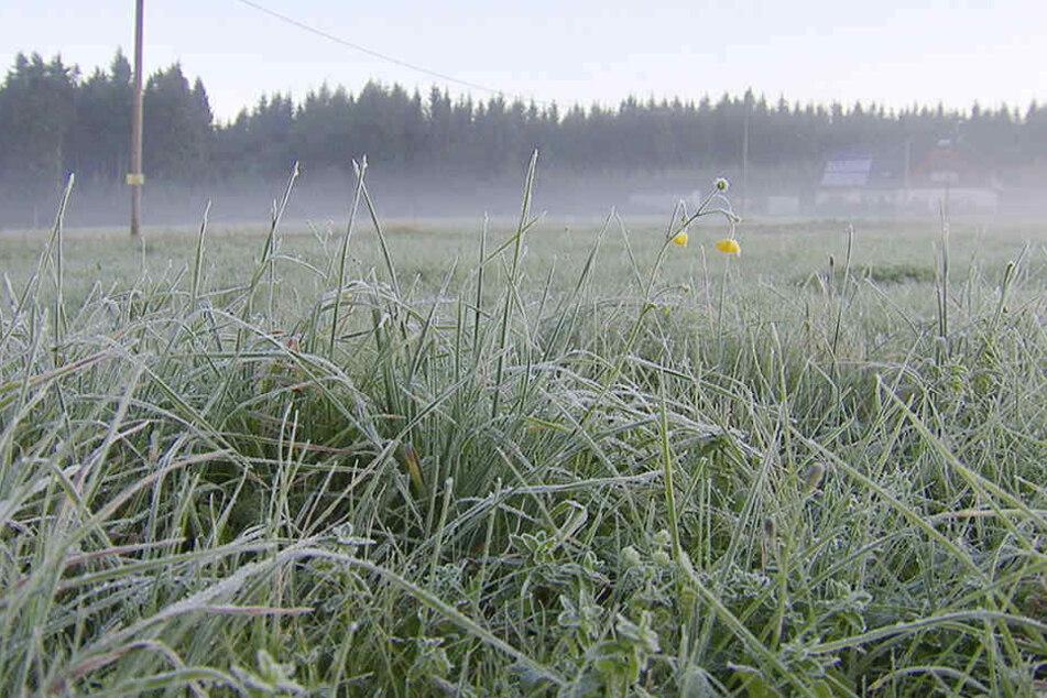 Am Montagmorgen rutschte das Thermometer auf minus 4,1 Grad in Kühnhaide.