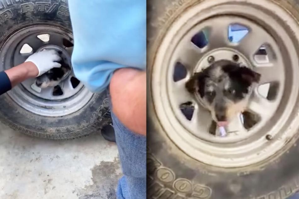 Der Hund steckte mit seinem Kopf in der Mitte des Reifens fest.