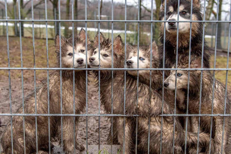 Diese süßen Vierbeiner suchen nun ein neues Zuhause.