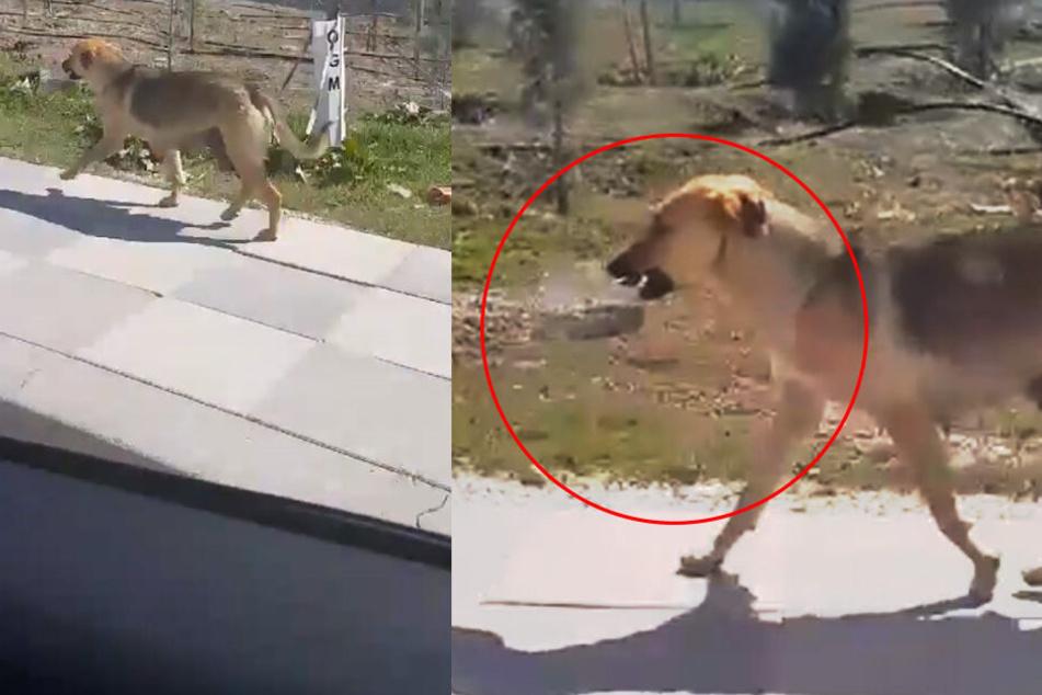Autofahrer entdeckt Hund mit Napf im Maul: Als er ihm folgt, wird alles klar