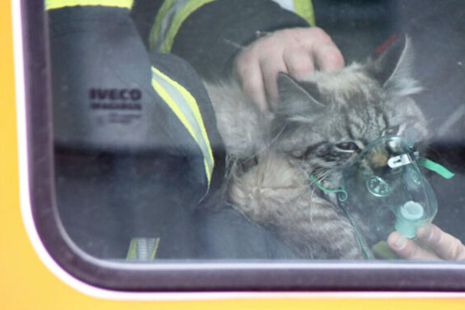 Feuerwehr rettet Katze aus brennender Wohnung und muss sie beatmen