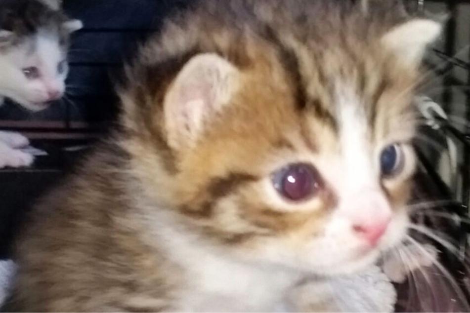 Die kleinen Katzen sind gerade einmal zwei bis drei Wochen alt.