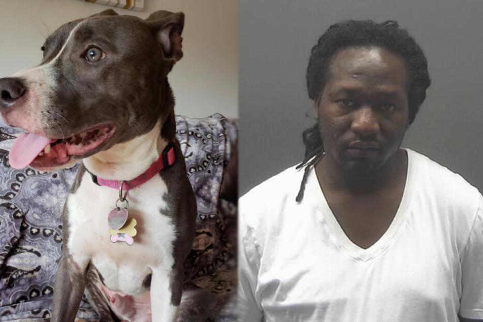 Mann wirft Hund in Käfig in Fluss, dann taucht ein anderer Hund auf