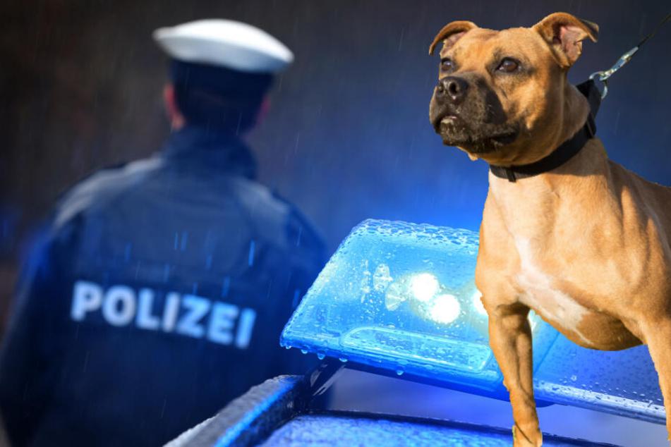 Polizei sucht gefährlichen Hund und findet etwas ganz anderes