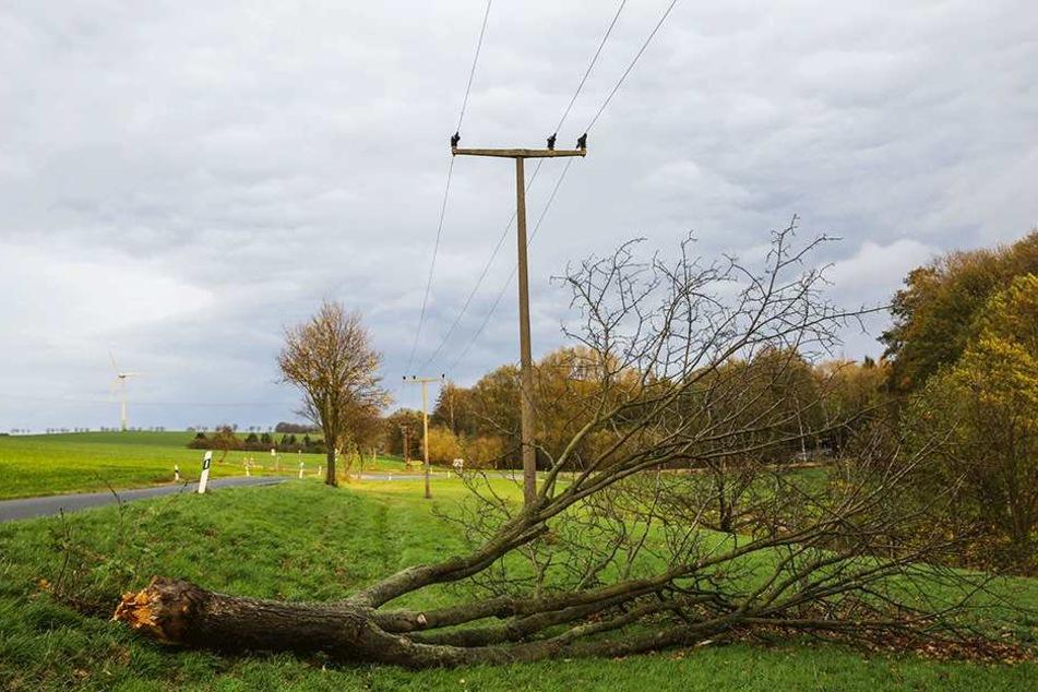 In ganz Sachsen knickte der Sturm reihenweise Bäume. Der Sachsenforst warnt  sogar vor seinen eigenen Wäldern: Lebensgefahr!