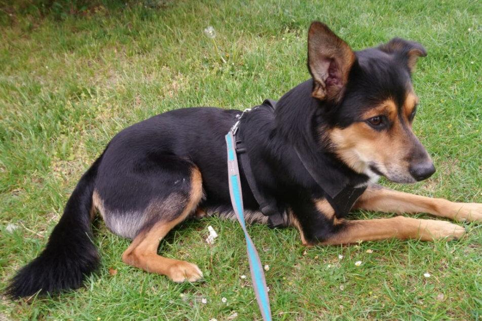 Mischlingshund Benni wurde tot in der Regentonne gefunden.
