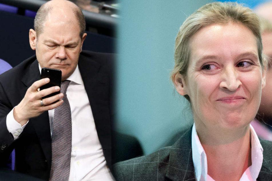 Afd Vorsitzender Brandenburg
