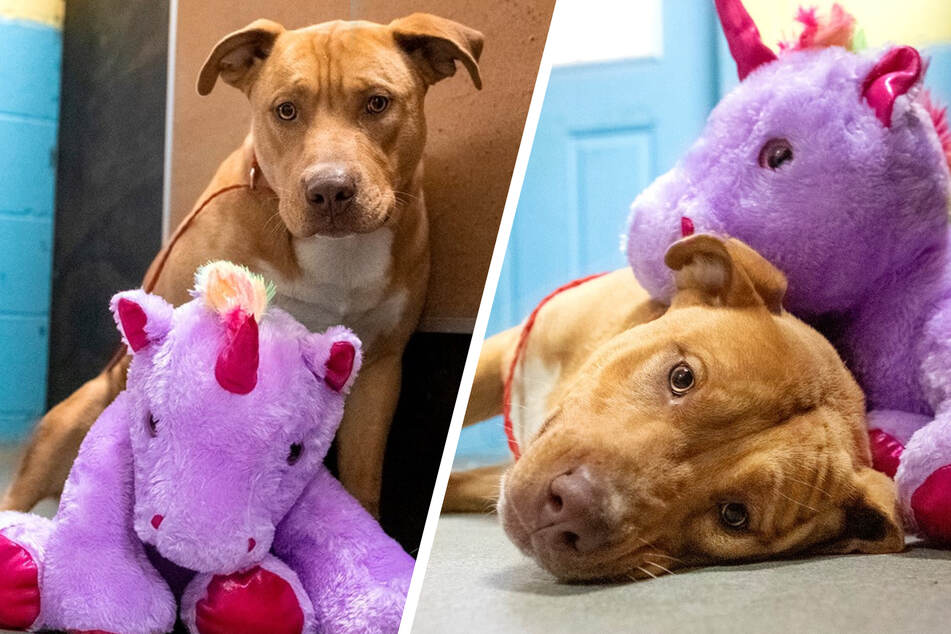 Lonely stray dog keeps trying to steal stuffed unicorn from store
