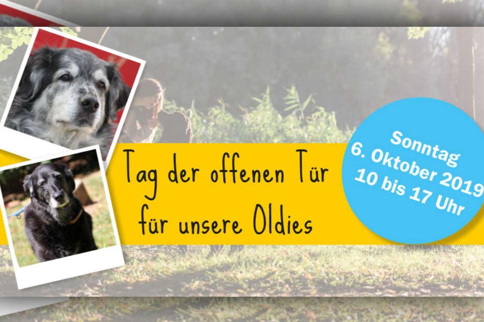 Am Sonntag den 6. Oktober lädt das Tierheim zu einem Tag der offenen Tür nach Riem ein.