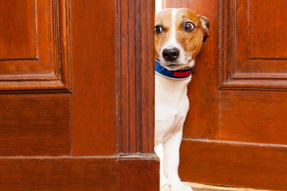 Hinter der Bürotür können für Hunde viele Gefahren lauern. (Symbolbild)