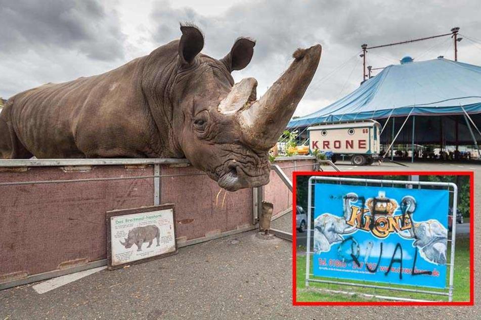 Circus Krone im Visier von Tierschützern und Rechten