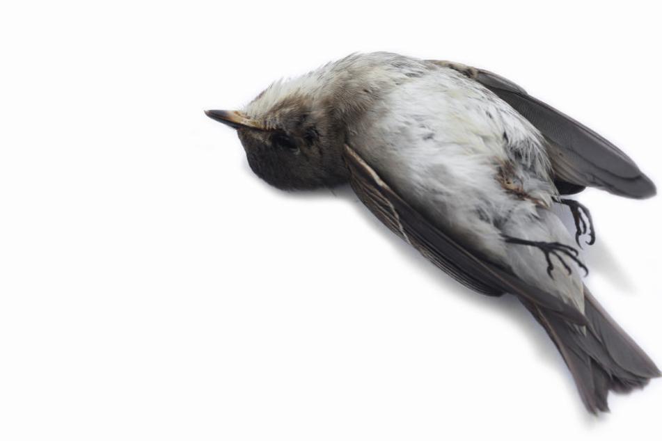 Mehrere Vögel mit Paste in Leipzig getötet: NABU erstattet Anzeige
