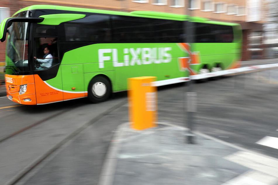 Das Fernbusunternehmen Flixbus darf sich über Nachwuchs freuen.