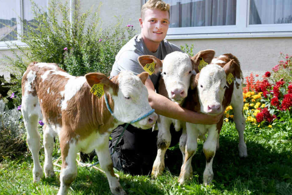 Anfang September bekam eine Kuh auf der Schwäbischen Alb die Drillinge Hanni, Hanna und Hannes.