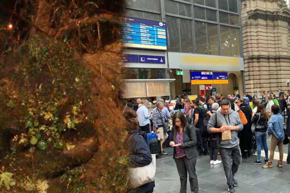 Heftige Unwetter toben über Deutschland: Große Schäden und Chaos bei der Deutschen Bahn