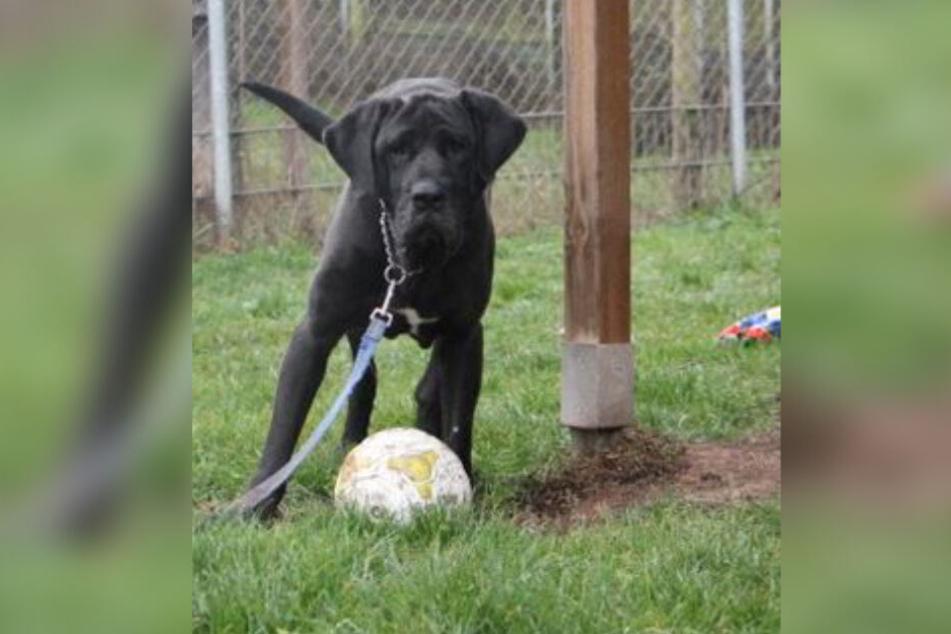 Mosa spielt mit einem Ball.
