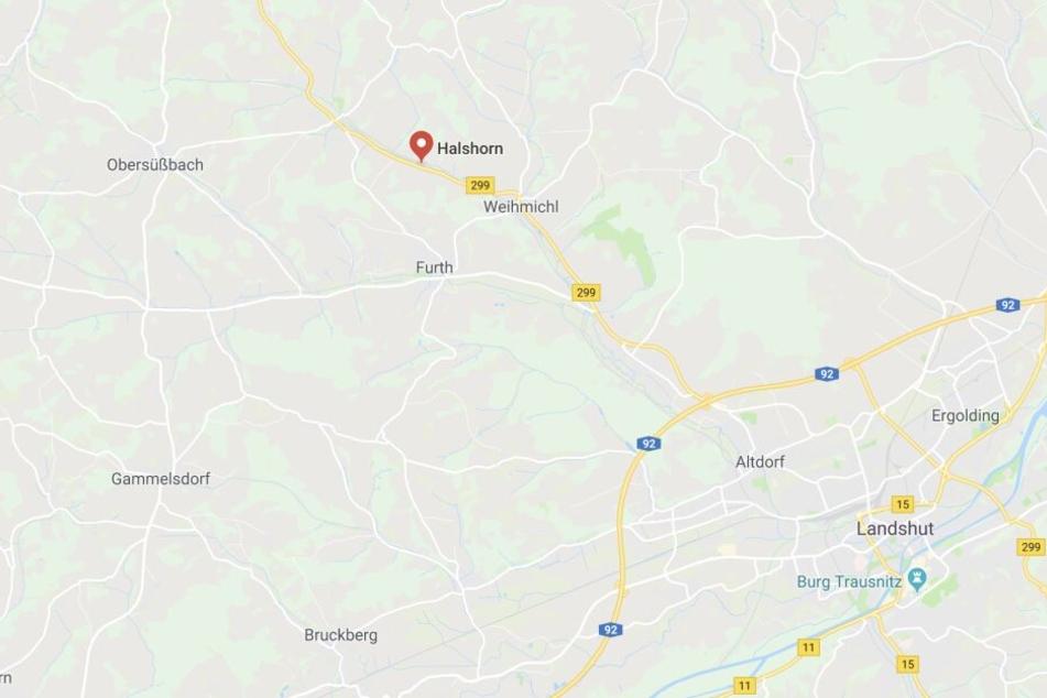 Der samtpfötige Täter griff die Polizisten in der Nähe von Landshut an.