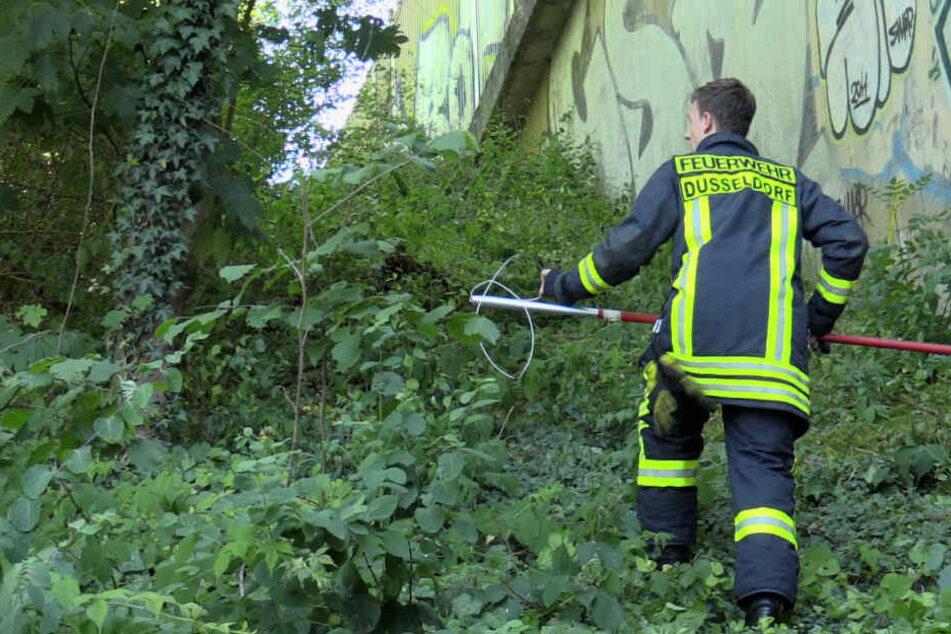 Vorsichtig pirscht sich der Feuerwehrmann an, aber umsonst ...