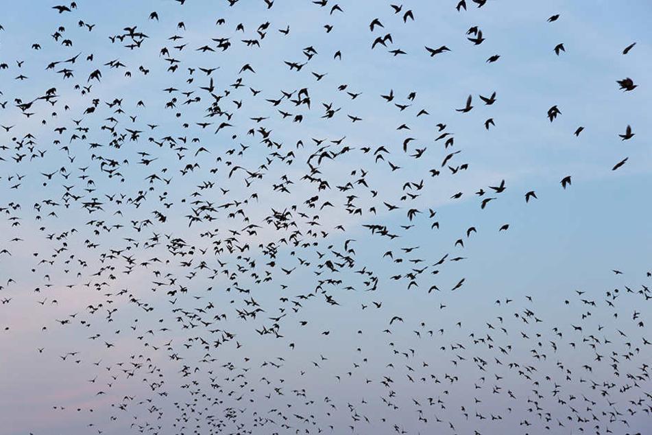 Ein abgestürzter Vogelschwarm sorgte auf einer Autobahn in Österreich für Chaos.
