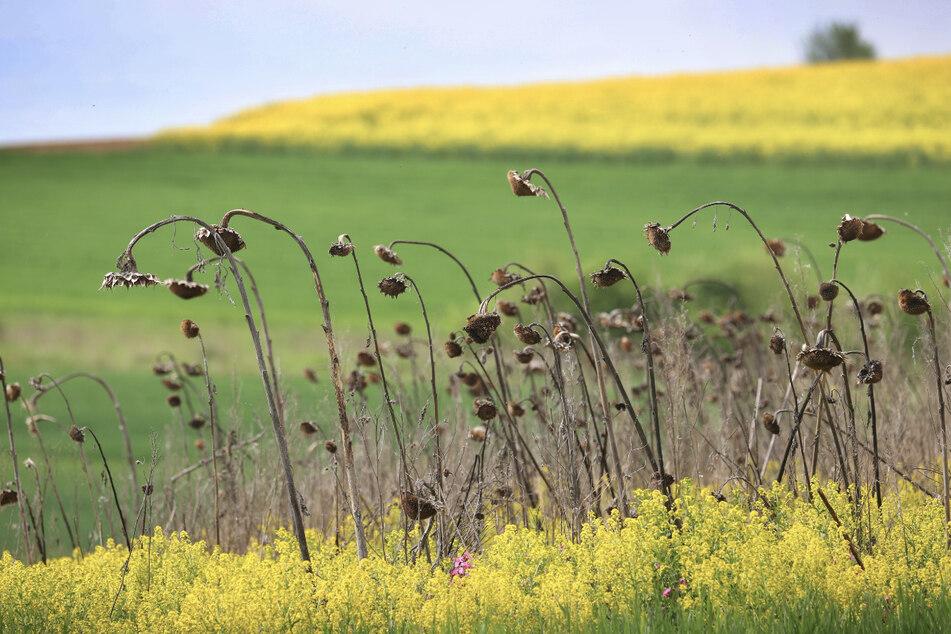 Natur wegen Corona im Stress! Naturschützer warnen