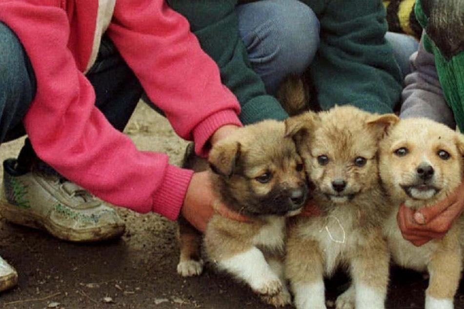 Die Kinder im Alter von eineinhalb bis 13 Jahren quälten die kleinen Hunde im Hinterhof. Nachbarn alarmierten die Polizei.
