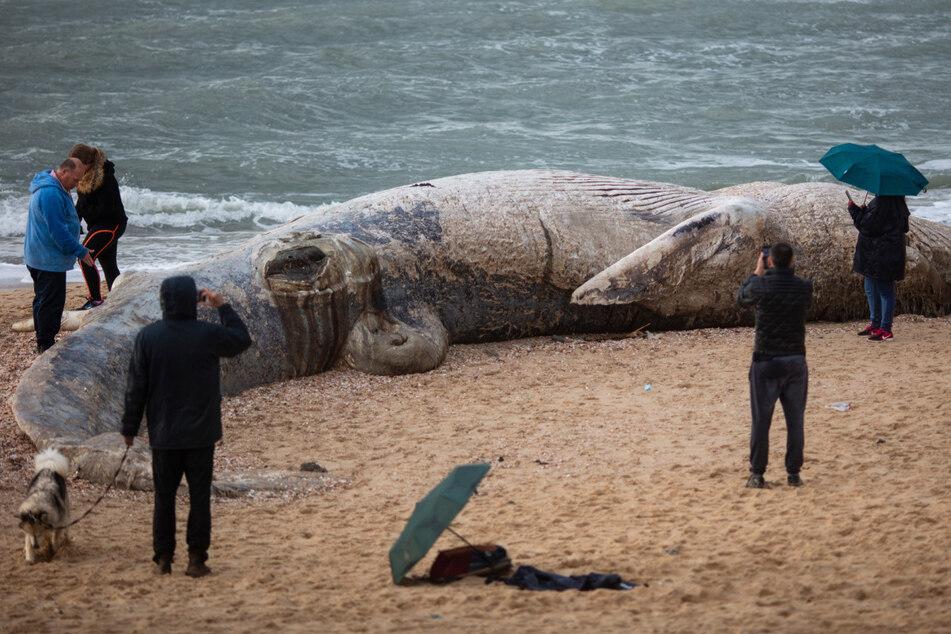 Schlimme Umweltverschmutzung im Mittelmeer! Etliche Tiere mit schwarzer Masse verklebt
