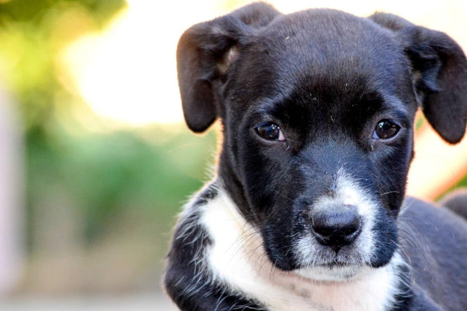 Frau klaut Gebäck: 19 Jahre später soll ihr deshalb der Hund weggenommen werden!