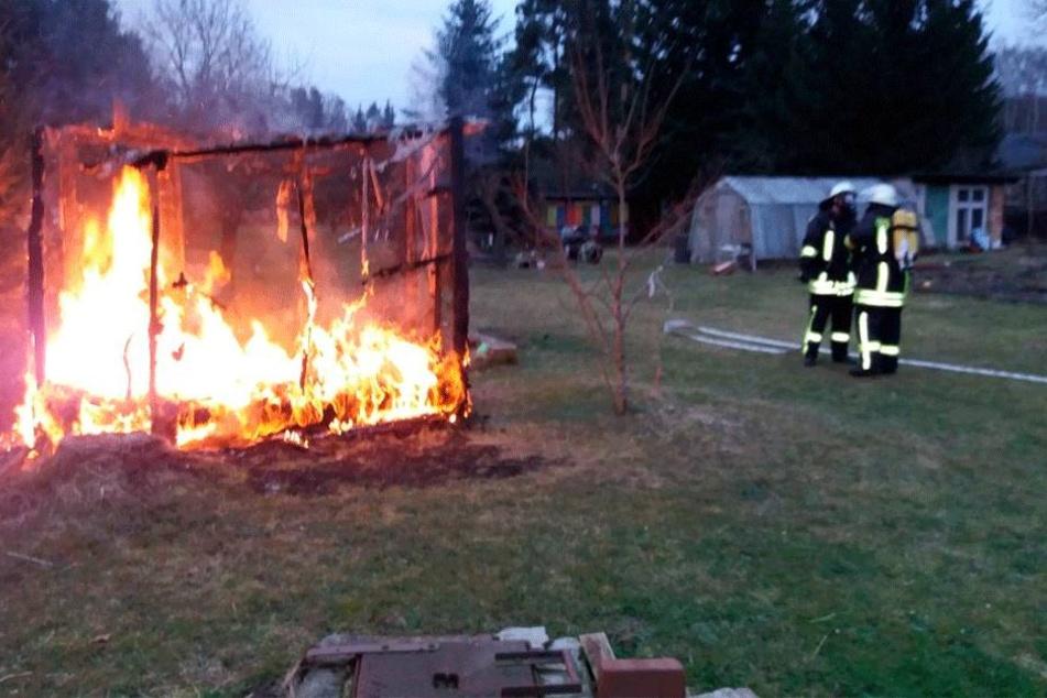 In diesem Inferno verbrannten sechs Nymphensittiche.