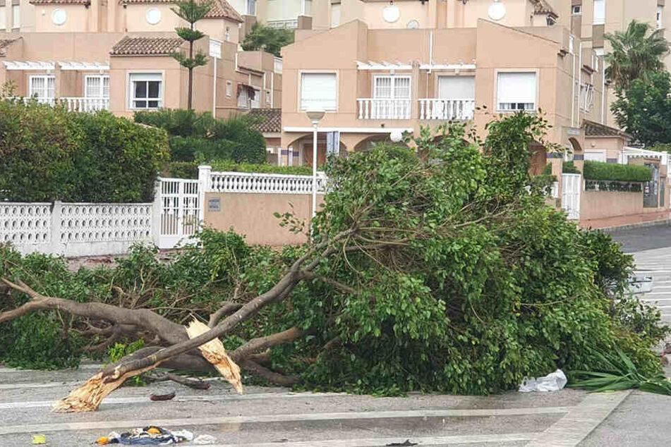 Die Äste eines Baumes liegen nach einem Sturm mit starken Winden in Guardamar del Segura auf der Straße.